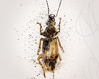"Martinefa's Original watercolor and Ink - "" Insect #5"""