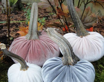 Handmade Plush Rose, Blush, Grey and White Velvet pumpkins  with real dried stems.
