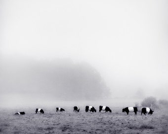 Cows in Fog, 8x8 fine art print