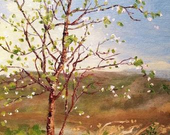 Backyard Cherry Tree