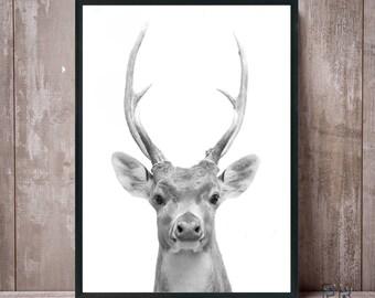 Deer Print, Deer Antlers, Animal Gift, Deer Art, Nursery Decor, Deer Black and White, Animal Print, Deer Poster, Deer Photo, Deer Wall Art