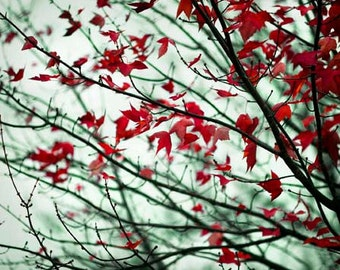 Nature Photography, Maple Leaves Photograph, Gray Blue Red, Rustic Fall Wall Decor