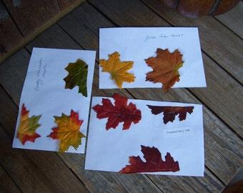 Three Fall Leaf Samples