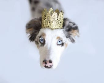 Pet Birthday Crown Gold Lace Crown for Dogs and Cats - Lola Pup Crown - Photo Prop - Birthday Party - Prince Princess Crown - 18K Gold