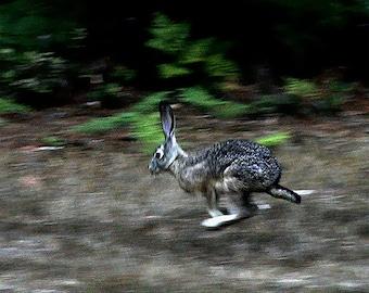 Jack on the Run