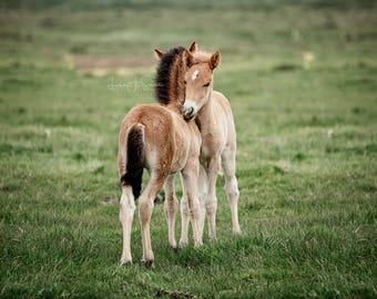 Foal Photograph Print | Wall Art | Horse Photography | Equine Fine Art Print | Nursery Print | Baby Animals | Equestrian Decor