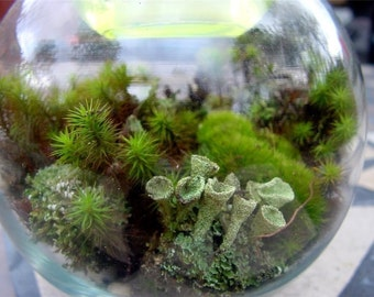 Terrarium kit-DIY Large Moss & lichen kit-FEATURED in 2015 Blog cabin in the 50 states of Etsy-Build your own-FREE Moss Care Book