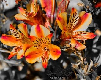 Vibrant Orange Flowers
