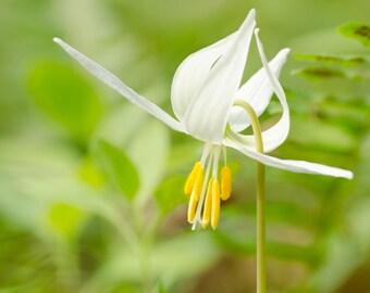"Flower photography notecard - 5x7"" frameable"