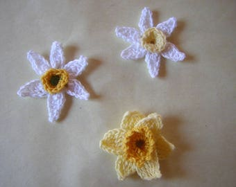 Daffodil flowers and daffodils