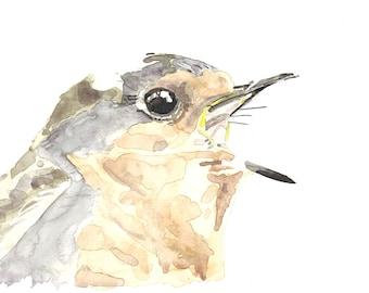 European Robin - Robin - original watercolor 2016