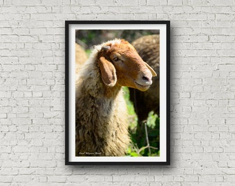Sheep Print, Nursery Animal Wall Art, Kids Printable Art, Farm Animal Animal Print, Nursery Printable