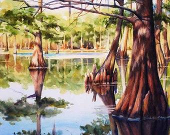 Cypress trees in Louisiana swamp, lake, print of watercolor painting