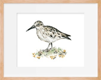 Sandpiper and Flowers Print, Beach Bird Art, Sandpiper Bird, Bird Art, Nautical Art, Coastal Art, Watercolor Print, Bird Print, Watercolor