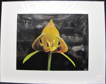 R. Lewis Hooten Uncommon Images Photograph Orchid Signed and Matted