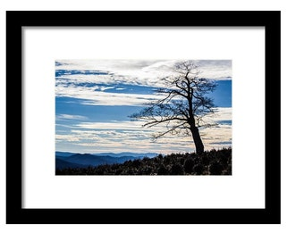 The Lone Tree Photo Photography Print -- Framed/Unframed/Canvas