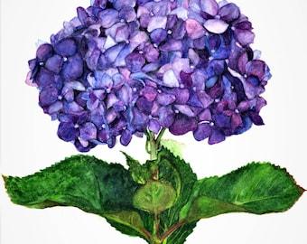 "Hydrangea,fine art giclee reproduction of an original watercolor painting by Meike Geisler 11.25"" x 14"" flower,purple,blue, green"