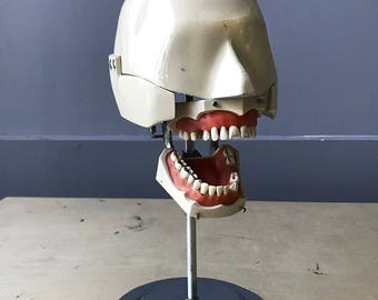 dental manikin vintage columbia dentoform Aluminum dental phantom