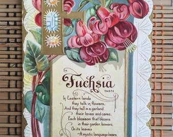 Fuchsia:  Beautiful Vintage Postcard