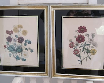 Jane Loudon Pair Botanical Lithographs 1840 Framed Oxalis Potentilla Not Reproductions