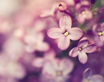 lilac botanical photography / spring photography, purple, lavender, amethyst, nature, macro photography, feminine, flower / lilac /