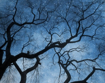 "Night Sky Photo ""No Star Like Thee"" Ethereal Starry Sky Art Print - Stars Tree Branches Photography Print"