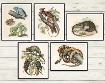 Reptiles and amphibians, vintage reptile prints, tree frogs, monitor lizard, common basilisk, indian chameleon, boa constrictor, snake print