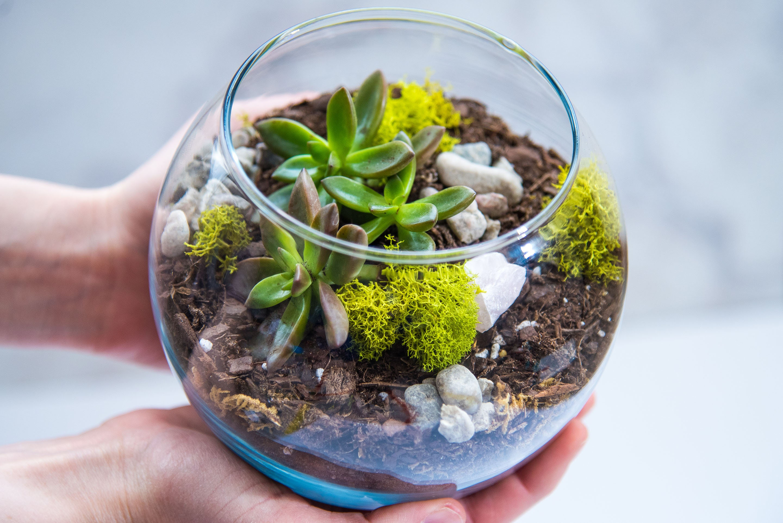 Mother S Day Succulent Terrarium Kit Medium Terrarium # Terrarium Dangle