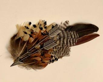 Arrowed Bird: Pheasant Hair Fascinator