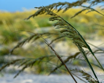 Print: Sea Grass on one of South Carolina's Low Country Beaches