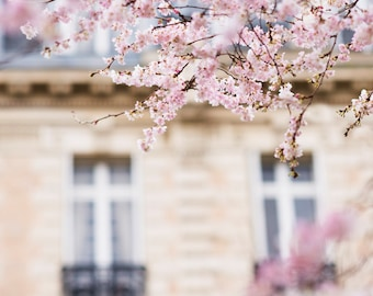 Paris Photograph -  Cherry Blossoms in Paris, Large Wall Art, French Home Decor