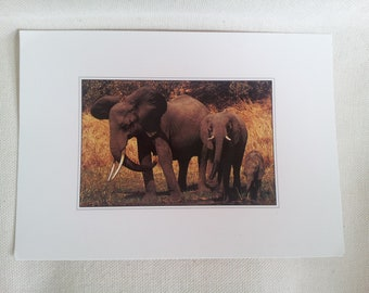 "Postcard ""Africa"" map / family of Elephants / Occasion"