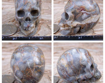 """2.0"""" 3.5oz 98.7g Fossil Skull Realistic Crystal Healing Magical Magick Metaphysical Mystic Reiki Wicca Altar Large 2 inch Brown SK802"""