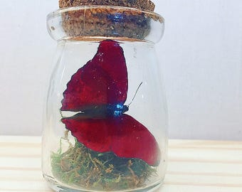 Mini Rustic Bottle | Flutter by Katie | Butterfly Display | All Natural | Accent Jar | Red Glider Butterfly | Sculpture | Home Decor