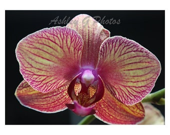 Instant download, photograph of an Orchid Bloom