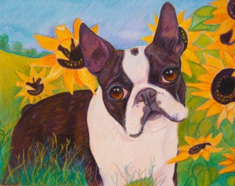 Boston Terrier in Sunflowers art painting art dog  Original  Painting  dog art  pet portrait dogs