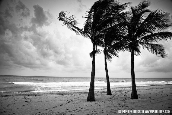 Beach photography black and white palm trees 20 x 30