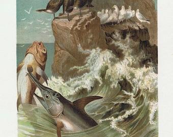 antique print swordfish 1892