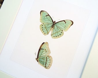 Pale Green Butterfly Naturalist Study Archival Print