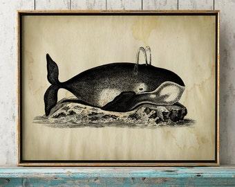 Aged WHALE Poster, Whale Print, Marine Decor, Nautical Art, Seal Life, Marine Life Print, Beach Home, Coastal theme, unframed wall art