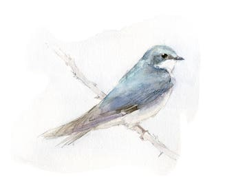 Tree swallow watercolor painting - bird watercolor painting - 5x7 inch print - 0191
