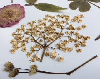 Real pressed flowers,scrapbooking,floral art,ready for frame,cards