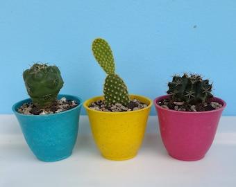ECO plant pot, cactus pot, ECO bamboo pot, little plant pot, little cactus pot, nature pot