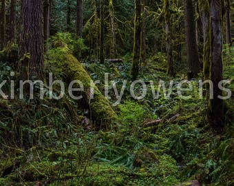 Forest, Nature photography, Trees, Lighting, Dreamy, Green wall decor, Dream World