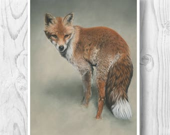 "Giclee Limited Edition Print - ""Foxtail"""