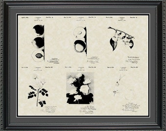 Luther Burbank Botanist Patent Collection Print Gift PBURB2024