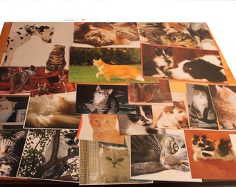 handcut collection of cat images,cat image ephemera kit,Craft pack for scrapbooks, smash book, collage,B-30,scrapbook cat pictures,cats