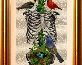 Anatomical print - Rib Cage with Birds Nesting with Eggs Print on upcycled French Dictionary Page mixed media digital print art skeleton