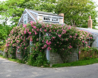 Nantucket Cottages, Cottages of Cape Cod and Nantucket Island, Siasconsett, Cottage Photography