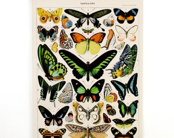 Butterfly Pull Down Chart Vintage Reproduction. French Papillons by Millot. Le Petit Larousse Print Poster Entomology Insects - CP209CV